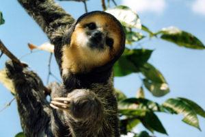 Amazonia Wildlife