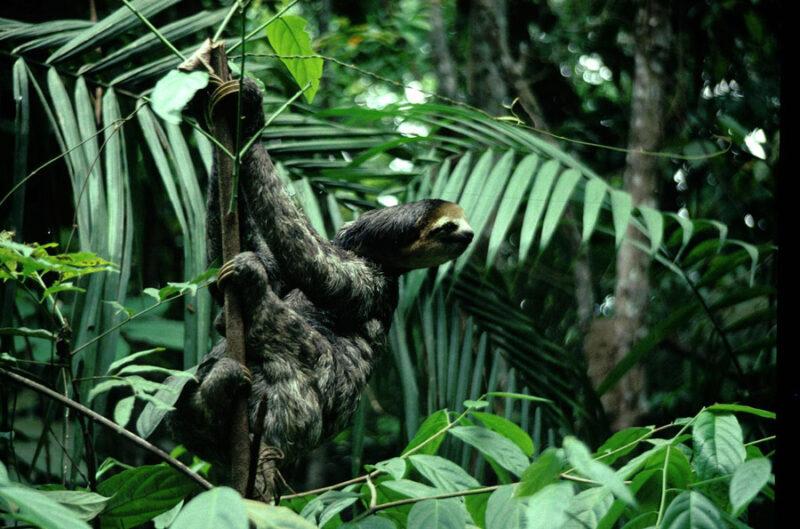 Amazon Ecotourism Trip-sloth-amazon forest
