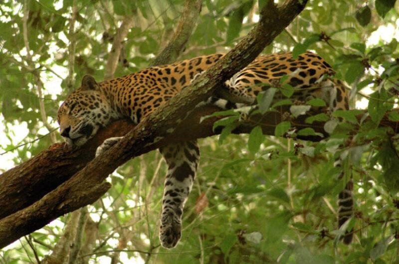 Amazon Ecotourism Trip-jaguar-amazon forest