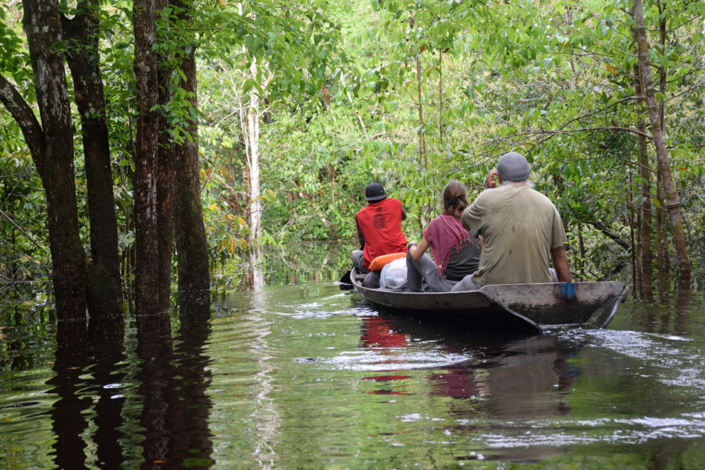 flooded forest- tourists-boat- amazon forest