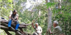 men-amazon forest- trees