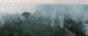 fire in the amazonian forest